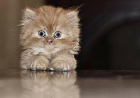 Слава Сэ  — а вот, если человеческий самец приносит котика, он ещё мужчина или сразу идиот?