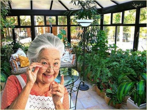 Бабушкины советы по домашнему цветоводству
