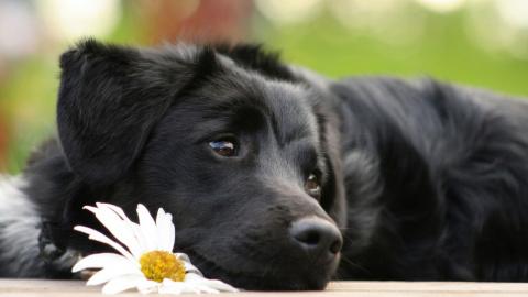 Как выбрать собаку и почему …
