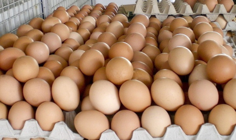 Что важно учитывать при выборе яиц в магазине