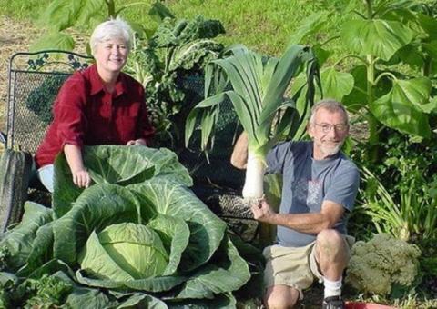 6 удивительных огородных секретов