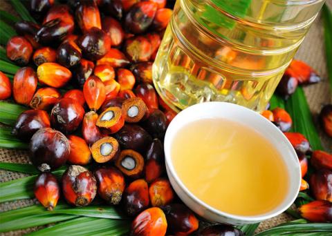 Пальмовое масло не является …