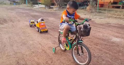 Малыш возит на велосипеде ще…