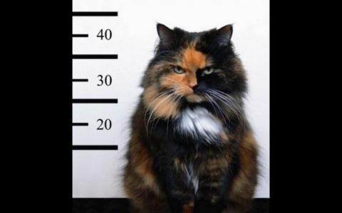Смешные и очаровательные котики