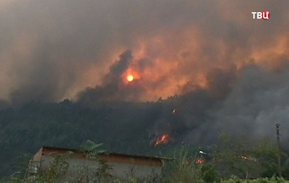 Жертвами лесных пожаров в По…