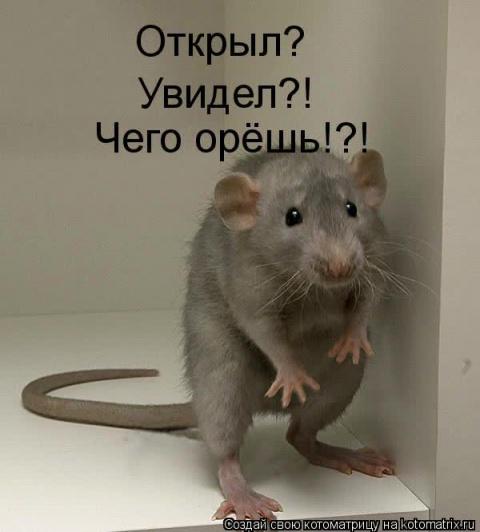 Чипита Негодяева