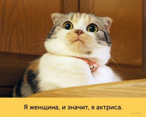 Эти кошки — настоящие короле…