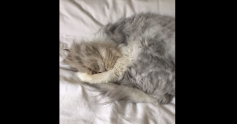 У этого кота самый странный …