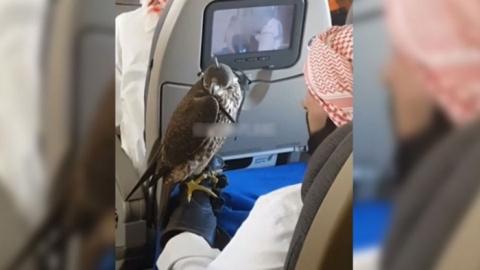 Саудовский принц купил билеты на самолет 80 соколам, и что из этого вышло