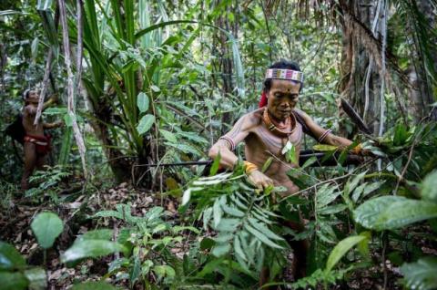 Уникальное изолированное племя в Индонезии, исчезающее с лица земли