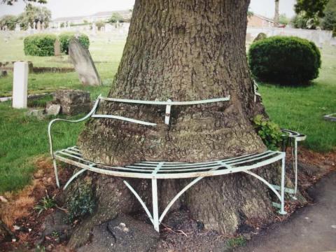 16 деревьев-силачей, которые…