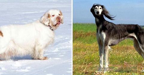 Замечательные породы собак, …