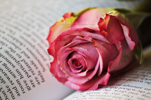 32 правила в любви (и не гов…
