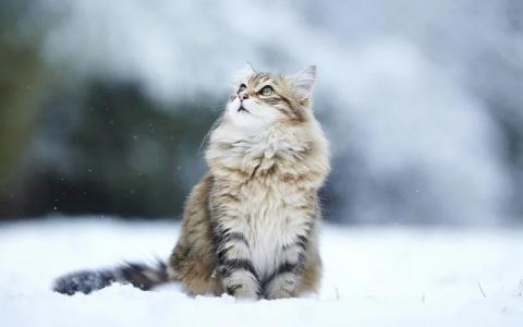 В Павлодарской области мужчина не устоял перед красотой кота и похитил его