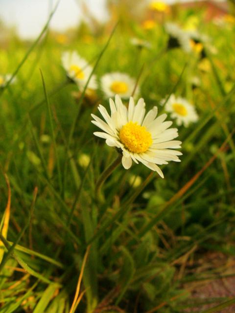 У нас в саду  Весна !!!