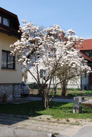 Весна....!