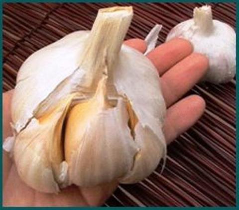 Как посадить чеснок по клубнике