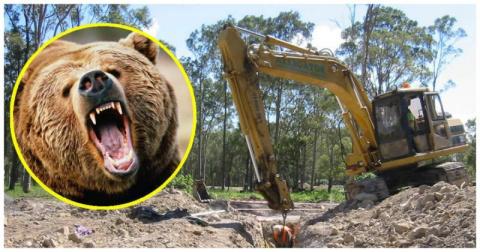 Добрые рабочие спасли медведя, застрявшего в выгребной яме