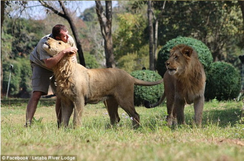 Эти львы были убиты ради лап и голов, которые используют в колдовских ритуалах