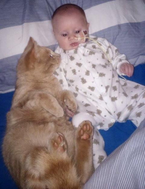 Кот находился рядом со своим…