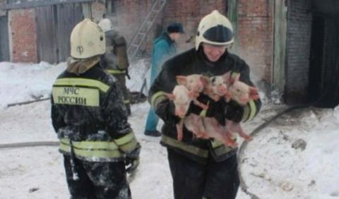В Томской области пожарные в…