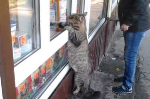 Когда кот активно включился в процесс покупки, этот парень не смог скрыть умиления