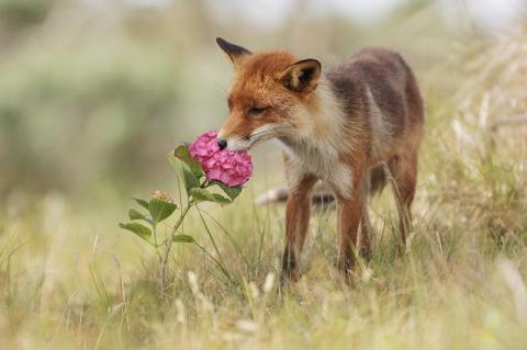 Замечательные фотографии животных от Юлиана Рада