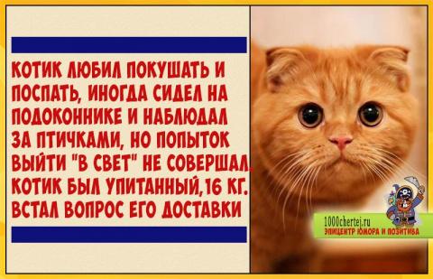 История про страдания кота, …