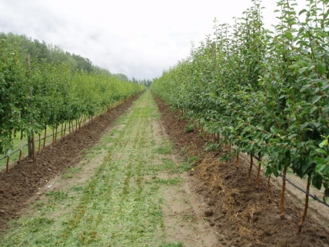 Этой весной в Дагестане заложили 573 гектара интенсивных садов