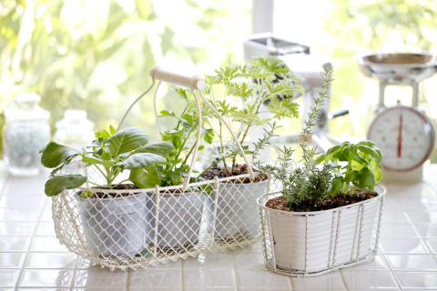 Декоративные овощи на окне