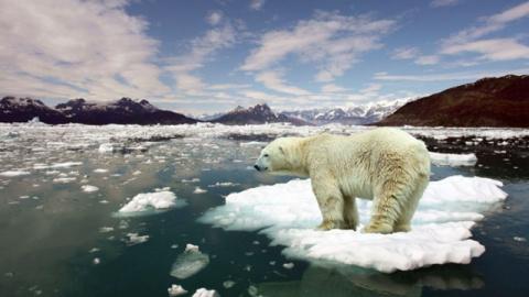 Сколько миллиардеров нужно, чтобы спасти планету