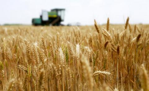 США и Канада теряют хлебные места