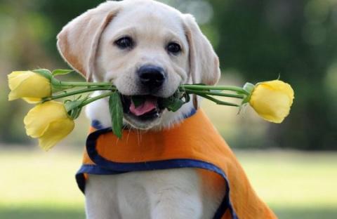 ТЕРЕМОК. Как научить собаку разным трюкам?