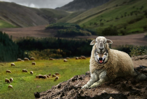 Волков в овечьей шкуре можно…