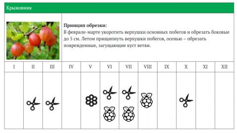 Календарь обрезки ягодных кустарников