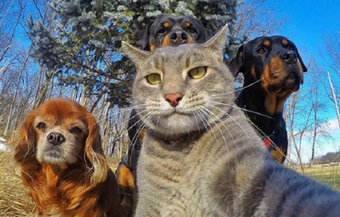 30 фотографий животных, кото…