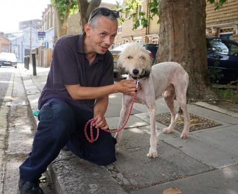 Бездомный тонколапый пёс лыс…