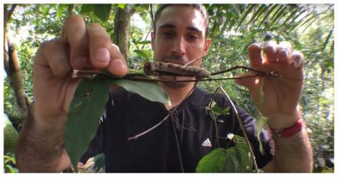 Эта гусеница превращается в змею, когда чувствует какую-то опасность