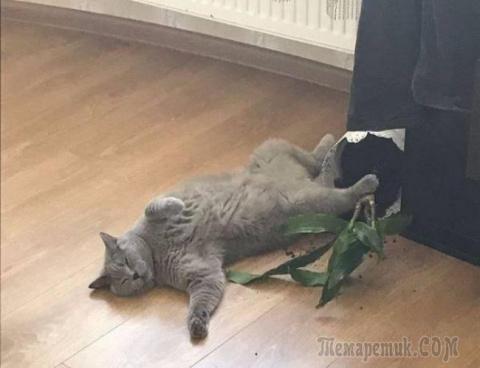 20 обалденных фото, в которых вся суть котов