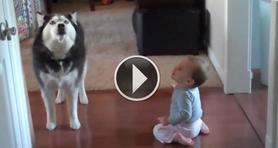 Собака имитирует малыша