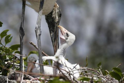Потомки динозавров: интересные факты о птицах