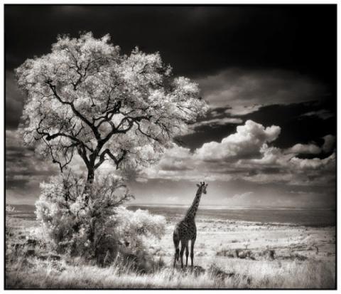 Удивительные черно-белые снимки