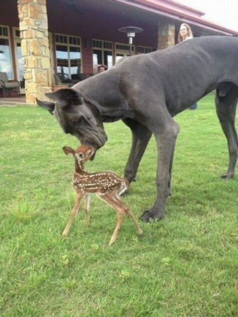 Забавные животные, которые з…