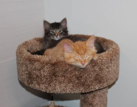 Котики, которые не готовы ра…