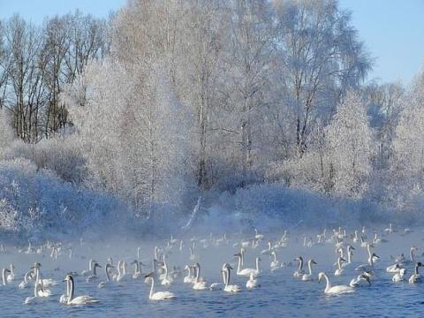 Лебединое озеро.. Алтай...