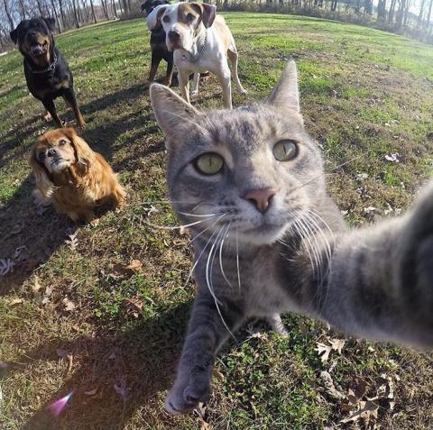 Фотогеничный Кот, Который Де…