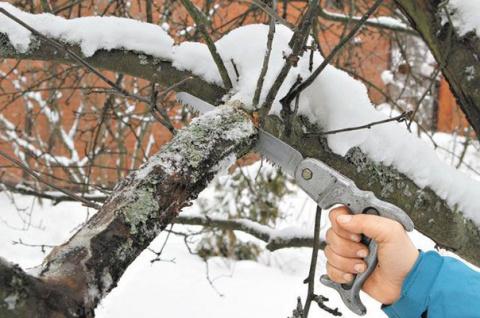 Для чего нужна обрезка деревьев зимой и как она выполняется