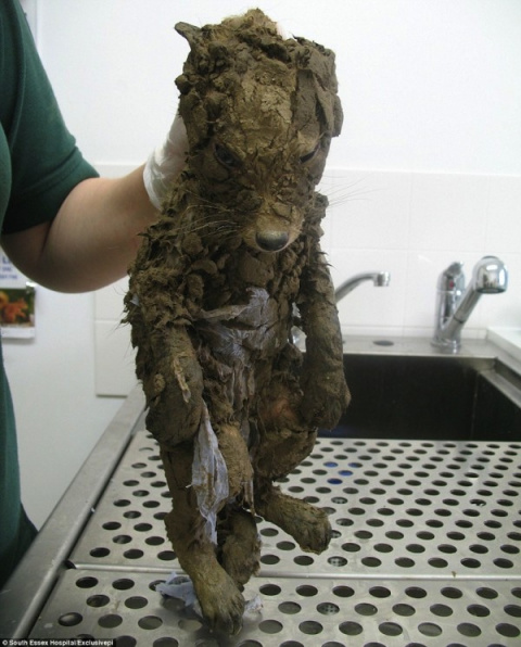Они нашли этого бедного малыша в куче грязи... Что случилось минутой позже? У меня просто нет слов!
