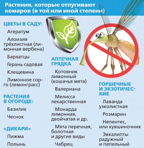Какие растения отпугивают комаров?