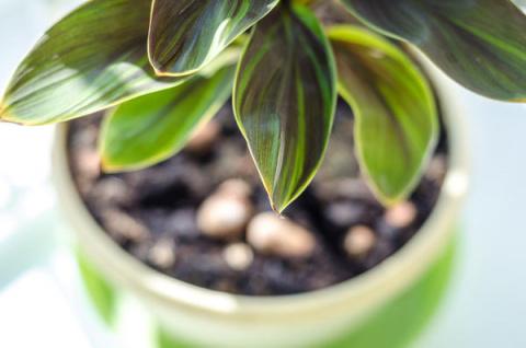 Комнатные растения: определя…
